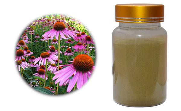 echinacea-purpurea-extract