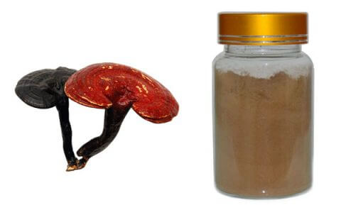reishi-mushroom-extract
