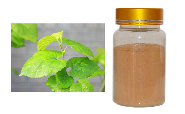 mulberry leaf extract 1-Deoxynojirimycin(DNJ)