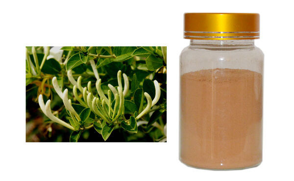 Honeysuckle Flower Extract Chlorogenic Acids