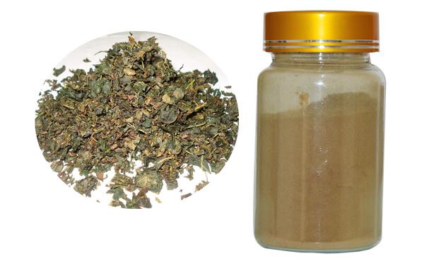 Eucommia ulmoides Extract,Chlorogenic Acid