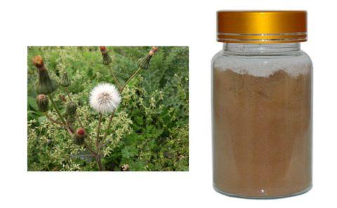 Dandelion herb Extract