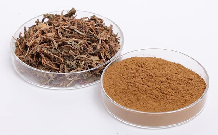 Herba Taraxaci extract
