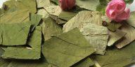 loquat-leaf-extract